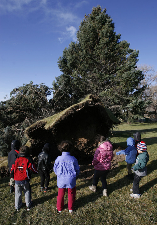 Francisco Kjolseth  |  The Salt Lake Tribune Kindergartners from the Jewish Community Center take a quick field trip to the front of the center on Thursday to check out the large pine that was knocked over by strong winds.