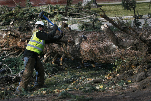 Scott Sommerdorf  |  The Salt Lake Tribune              Tyler Bacus drives a wedge into the trunk of a 70-foot pine tree that fell in the early hours of the morning at South Temple and T Street Thursday. Bacus and Len Jaynes worked to clean up the tree that had fallen across T Street.