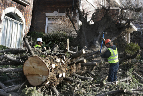 Scott Sommerdorf  |  The Salt Lake Tribune              Tyler Bacus, left, and Len Jaynes work to cut up a 70-foot pine tree that fell early Thursday morning at South Temple and T Street.
