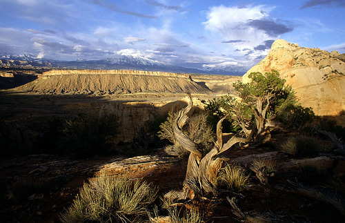 Courtesy Photo The Burr Trail.