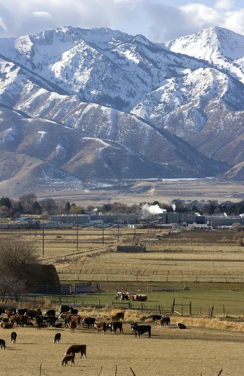 Al Hartmann  |  The Salt Lake Tribune On Dec. 12, 2006, Immigration and Customs Enforcement executed