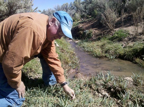 Brandon Loomis | The Salt Lake Tribune Jim Catlin of the Wild Utah Project examines creekside trampling in September after a season's grazing at the Duck Creek allotment in Rich County. Wild Utah Project is one of two organizations trying to force changes to protect range health and sage grouse habitat.