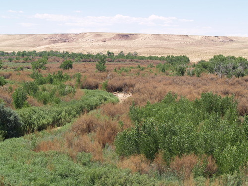 Courtesy Division of Wildlife Resources 'Before' photo of tamarisk removal project along San Rafael River.