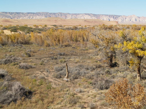 Courtesy Division of Wildlife Resources 'After' photo of tamarisk removal project along San Rafael River.