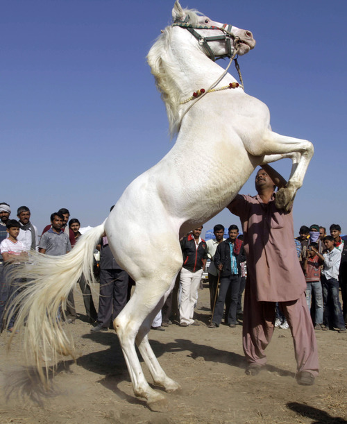 An Indian participant jumps his horse during a horse show at Dholera, about 110 kilometers (63 miles) from Ahmadabad, India, Sunday, Jan. 8, 2012. Around 150 horses are taking part in the show which is organized to promote, showcase and raise awareness about the Indian breeds of horses. (AP Photo/Ajit Solanki)