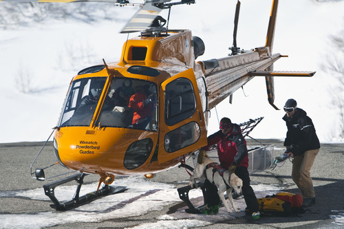 Chris Detrick  |  The Salt Lake Tribune Rescuers and their dog get out of a Wasatch Powderbird helicopter at Snowbird Saturday January 28, 2012. One person died in an avalanche in the backcountry between Big and Little Cottonwood canyons late Saturday morning. Unified Police Department Lt. Justin Hoyal said a group of three people were skiing on Kessler Ridge, an area that drops down into Mineral Fork Canyon in Big Cottonwood Canyon, when the avalanche was triggered at about 11:30 a.m.