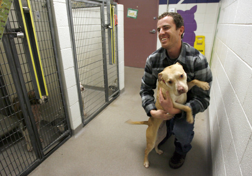 Francisco Kjolseth  |  The Salt Lake Tribune John Coulter, adoption and outreach coordinator for the Salt Lake County Animal Shelter gets some affection from a dog on Thursday. Some animal advocates are asking the West Valley-Taylorsville Animal Shelter to cease use of the gas chamber and set a goal of becoming a no-kill facility. They point to the Salt Lake County Animal Shelter as an example. That shelter offers discount adoptions, works with rescue groups and has longer animal holding times.