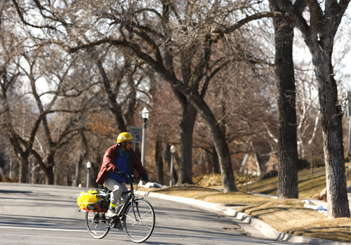 Leah Hogsten  |  The Salt Lake Tribune Aging sycamores and maple trees on the east bench of Salt Lake City are sick from insects or disease. The city may ask residents to help pay for treating the sick trees.  Friday, February 3, 2012