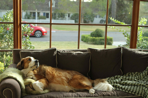 This video grab provided by Volkswagen of America Inc., shows Bolt the dog on the couch, watching the all new Volkswagen Beetle go by. The spot will air during Super Bowl XLV1, Sunday, Feb. 5, 2012. (AP photo/Volkswagen of America Inc.)
