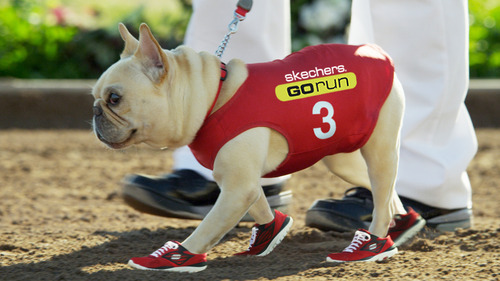 This advertisement provided by Skechers USA, shows Mr. Quiggly wearing Skechers sneakers in an ad to be aired at Super Bowl XLVI, Sunday, Feb. 5, 2012. (AP Photo/Skechers USA)