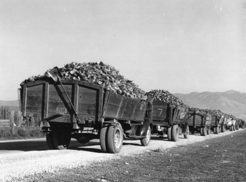 Photo courtesy Utah State Historical Society  Beet growers' trucks waiting to be unloaded. Lewiston, Utah. 1940.