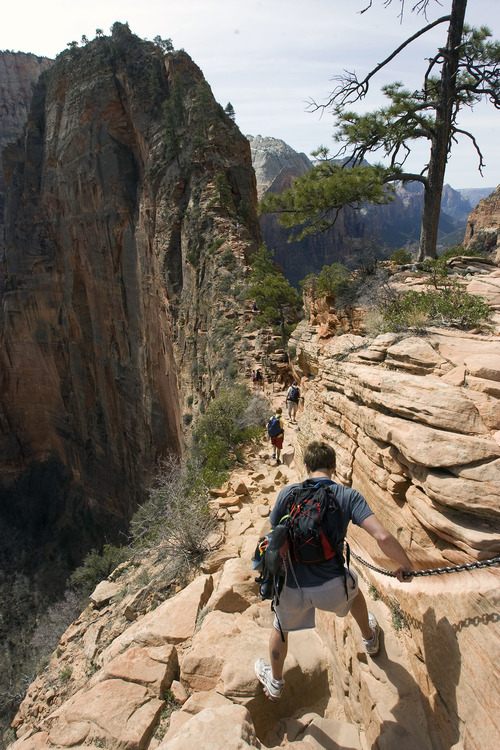 Al Hartmann  |  Tribune file photo  Hikers carefully make their way up a section of the Angels Landing Trail in Zion National Park in March 2009. The trail offers one of the premier hikes in the park, taking visitors along a steep rock spine that climbs to a magnificent view of the Virgin River and Zion Canyon below. But the hike is not for those who fear heights.  An anchor chain is embedded in the rock in steep places along the trail for hikers to grab onto for safety.