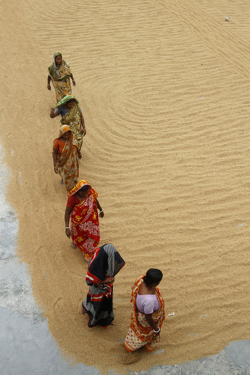 Bangladeshi women use their feet to scatter rice grain spread out to dry at a rice mill on the outskirts of Dhaka, Tuesday, April 10, 2012. (AP Photo/Pavel Rahman)