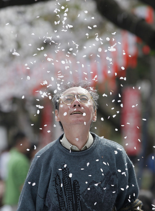 A man admires cherry blossom petals falling as cherry blossoms are in full bloom at Ueno Park in Tokyo,Tuesday, April 10, 2012.  (AP Photo/Koji Sasaha