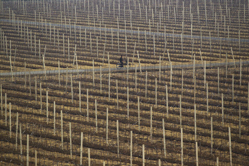 A North Korean man rides a bicycle on the grounds of a communal apple farm on the outskirts of Pyongyang, North Korea on Tuesday, April 10, 2012. (AP Photo/David Guttenfelder)