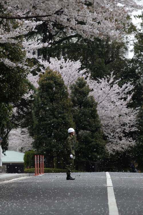 Cherry blossom petals fall on a Japan Self-Defense Force member standing in the compound of the Defense Ministry where PAC-3 Patriot missile units are deployed for North Korea's rocket launch, expected to take place sometime between April 12-16, in Tokyo Wednesday, April 11, 2012. North Korean space officials said Tuesday that all assembly and preparations for this week's planned satellite launch have been completed, and denied it is a cover for a missile test. (AP Photo/Shizuo Kambayashi)