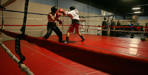 Steve Griffin/The Salt Lake Tribune   Isaac Aguilar is perhaps the state's best amateur boxer. He will be fighting in the Golden Gloves Western Regional this weekend in Murray. Here, Aguilar spars at the Muay Thai Institute in Salt Lake Cit on April 10, 2012.