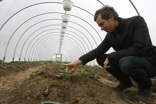 Rick Egan  | The Salt Lake Tribune   Clinton Felsted, owner of the La Nay Ferme, inspects plants grown in a greenhouss or
