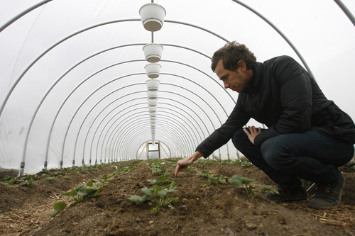 Rick Egan  | The Salt Lake Tribune  Lettuces, arugula, chard, chives, spinach, peas, onion, garlic, leeks, carrots, turnips and strawberries are all flourishing at La Nay Ferme, a new Utah CSA program located next to a cemetery in the Utah County foothills. Nearly 60 volunteers, who get paid in produce, have helped owner Clinton Felsted prepare for the first crops.