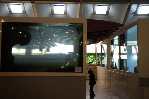 A child looks up at a fish tank at a hotel in Pyongyang, North Korea, Tuesday, April 17, 2012. (AP Photo/Ng Han Guan)