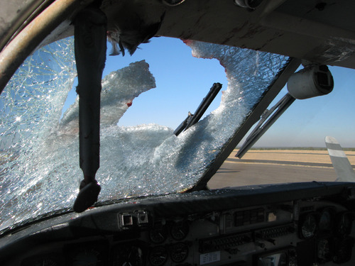This undated handout  photo provided by the city of Show Low, Ariz., shows the windshield of this twin-engine Beechcraft C-99 turboprop was heavily splattered with blood and guts after striking a Western Grebe, a two-foot long water bird, at 11,000 feet over eastern Arizona on Nov. 4, 2009. Most bird strikes don't damage planes or force emergency landings. Ralph Paduano, a United Continental pilot who has flown for 26 years, said he's hit birds both on takeoff and on landing. (AP Photo/City of Show Low, Ariz.)