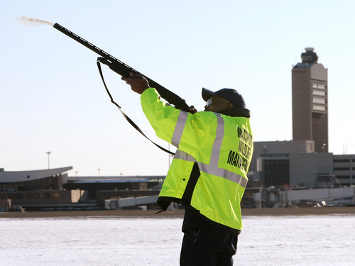 FILE- In this Jan. 16, 2009 file photo, Ulysses Dublin, one of four full-time Massport wildlife technicians, fires a non-lethal pyrotechnic round from a standard shotgun to disperse birds from the runways and surrounding areas at Logan International Airport in Boston, Mass. Although there is evidence that bird-control efforts near airports are paying off, U.S. Sen. Kirsten Gillibrand, D-NY, introduced legislation on Wednesday, April 25, 2012 that would make it easier to round up geese near JFK Airport and kill them, after a second airliner was forced from the skies over New York due to a bird strike.  (AP Photo/Pool, John Tlumacki, File)