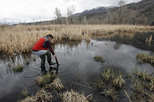 Francisco Kjolseth  |  The Salt Lake Tribune Paula Trater, seasonal biological technician for the Utah Reclamation Mitigation and Conservation Commission, also known as