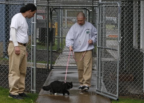 Washington Prison Program Bunking With Cats The Salt