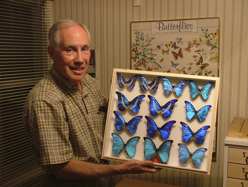 Courtesy of Andrew Weeks The late James Pearce, a Salt Lake City physician, has collected  thousands of  butterflies dating back to his childhood In this 2005 file photo he displays a favorite species,  Morpho cyrpis. The Pearce family has donated his 16,000-specimen collection to the Natural History Museum of Utah.