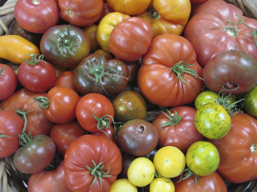 The annual plant sale, sponsored by Wasatch Community Gardens, is a good place to purchase heirloom tomato seedlings. (Courtesy photo from Wasatch Community Gardens)