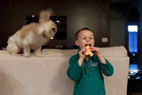 Trent Nelson  |  The Salt Lake Tribune T.J. Carver eats a slice of cheese with one of the family dogs, Tyke, looking on, Wednesday, March 28, 2012 in Ogden, Utah. Carver's mother, Jen Carver served two tours in Iraq and is a full time college student with an on-campus job.