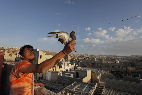 In this Monday, May 14, 2012 photo, Palestinian refugee, Wesam Khaled, 25, holds a pigeon at the Al Baqa' refugee camp north of Amman, Jordan. Hundreds of thousands of Palestinians were forced to flee from their villages in 1948 in what Palestinians mourn as the