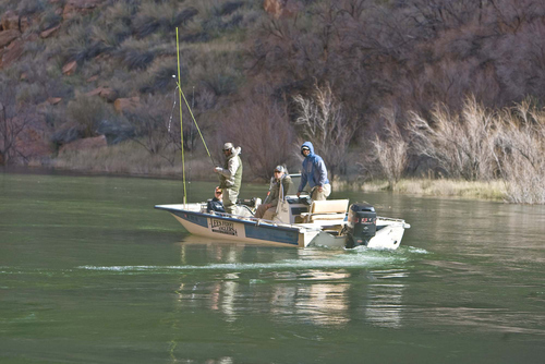 Tribune file photo Anglers from Lee's Ferry try their luck on the Colorado River below Glen Canyon Dam after valves were opened in 2008, sending water surging into the river. Trout downstream of the dam are one threat to native endangered fish.
