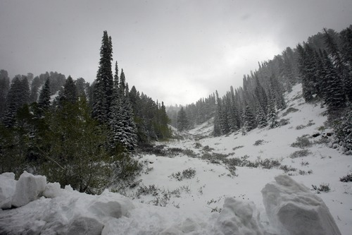Rick Egan  | The Salt Lake Tribune   SIx inches of snow on highway 162 near Power Mountain ski resort, just above Eden, Utah, Sunday, May 27, 2012.