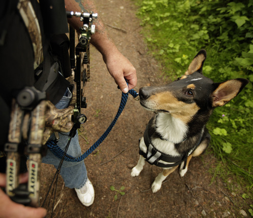 Apollo, the service dog of U.S. Army Spc. Mike Ballard, stands in attention for his next command during an archery shooting session, Friday, May 17, 2012, in Puyallup, Wash. Ballard says his dog helps him get through the worst symptoms of the post-traumatic stress disorder that is a remnant of an explosion in Afghanistan that ended his career as an Army medic. (AP Photo/Ted S. Warren)