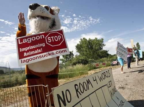 Leah Hogsten  |  The Salt Lake Tribune Heather Kasteller of Sandy dressed in a tiger suit to protest the treatment of wild animals at Lagoon Amusement Park.  Protesters lined Lagoon Drive in Layton Saturday, June 2 2012 in Layton. to protest Lagoon's treatment of animals in the park as seen from the Wild Kingdom Train ride that circles a zoo where big cats, zebras, and other animals are confined to small enclosures.