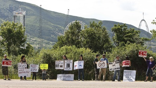 Leah Hogsten  |  The Salt Lake Tribune  Protesters lined Lagoon Drive in Layton Saturday, June 2 2012 in Layton. to protest Lagoon's treatment of animals in the park as seen from the Wild Kingdom Train ride that circles a zoo where big cats, zebras, and other animals are confined to small enclosures.
