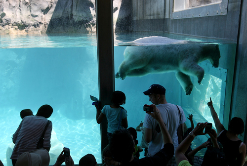 Steve Griffin | The Salt Lake Tribune  Visitors get a close-up look at a polarbear  in the new Rocky Shores exhibit at Hogle Zoo June 1, 2012 in Salt Lake City.