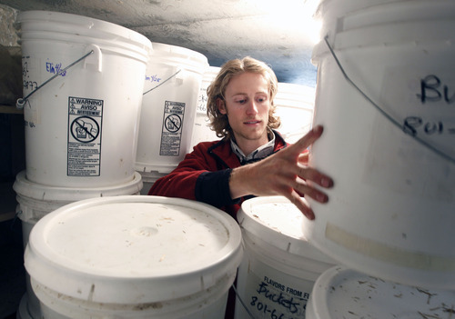 Al Hartmann  |  The Salt Lake Tribune  Chase England checks the white plastic buckets that grow gray oyster mushrooms on their farm in East Layton.  The mushrooms are started with spores, which feed off sugars of grain and straw.  The buckets are kept in a dark brick shed.