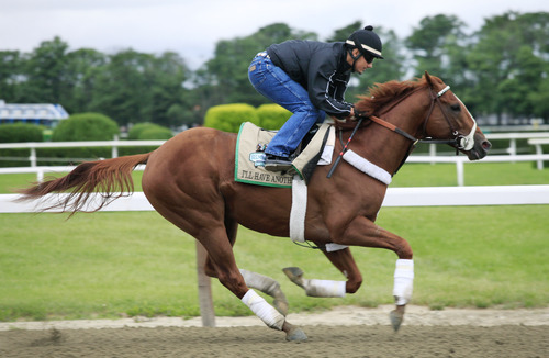 Jonny Garcia gallops I'll Have Another, Monday, June 4, 2012 at Belmont Park in Elmont, N.Y. The Kentucky Derby and Preakness winner goes for horse racings Triple Crown Saturday. (AP Photo/Mark Lennihan)