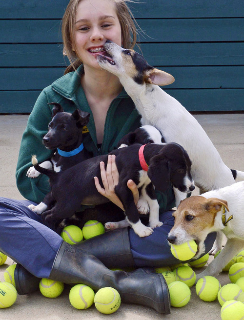 Lisa Thom, a Dog's Trust volunteer, is surrounded by puppies playing with used tennis balls at the Dog's Trust Harefield Rehoming Center, West London Sunday June 24, 2012. The center is looking forward to receiving a new batch of used tennis balls which are donated by the All England Club from their Wimbledon Championship, which begins Monday.   (AP Photo/Rebecca Naden/PA Wire)  UNITED KINGDOM OUT NO SALES NO ARCHIVE