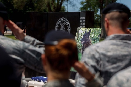 Trent Nelson  |  The Salt Lake Tribune Deceased military working dog Marco is honored during a ceremony for military working dogs held by the 75th Air Base Wing Security Forces at Hill Air Force Base on Friday, June 29, 2012.