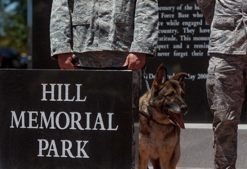 Trent Nelson  |  The Salt Lake Tribune Military working dog Arek is honored during a retirement ceremony for four military working dogs held by the 75th Air Base Wing Security Forces at Hill Air Force Base on Friday, June 29, 2012.