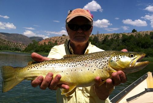 Green river fishing report time to dry fly with sallies for Green top fishing report