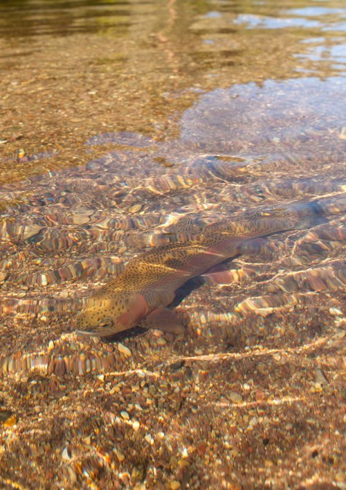 Green river fishing report time to dry fly with sallies for Green river utah fishing report