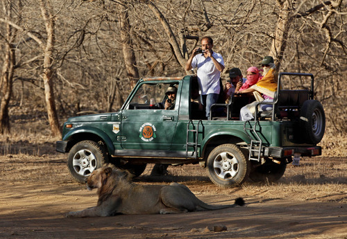 In this Sunday, March 25, 2012 photo, tourists take photos of a lion during a safari at the Gir Sanctuary in the western Indian state of Gujarat, India. Nurtured back to about 400 from less than 50 a century ago, these wild Asiatic lions are the last of a species that once roamed from Morocco and Greece to the eastern reaches of India. The subject of saving lions is an emotional one in India. The lion also holds iconic status in religions and cultures. The multi-armed Hindu warrior goddess Durga is traditionally shown with a lion as her mount. Four lions make the national emblem - symbolizing power, courage, pride and confidence. (AP Photo/Rajanish Kakade)