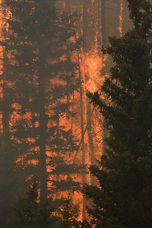 Paul Fraughton  |  The Salt Lake Tribune Trees explode into flames in Huntington Canyon on Wednesday, June 27, 2012, as the  Seeley Fire burns  in the Manti-La Sal National Forest.