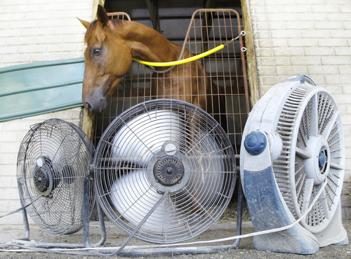 Fans keep one of owner Jonathan Sheppard's horses cool in the stables at Colonial Downs in New Kent County, Va., Tuesday, July 17, 2012. (AP Photo/Richmond Times-Dispatch, Alexa Welch Edlund)