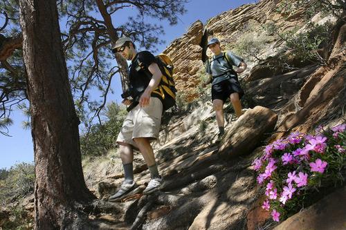 Tribune file photo Five don't-miss Zion National Park attractions: Kolob Canyon.