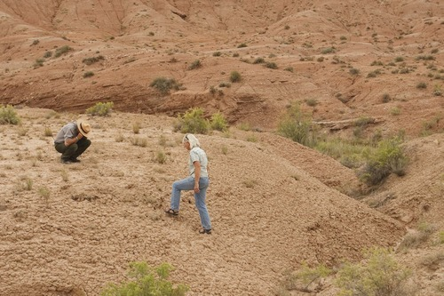 Leah Hogsten  |  The Salt Lake Tribune  Dave Worthington, resources management and science chief and Sandy Borthwick, biologist at Capitol Reef National Park, hunt for specimen of two endangered cactus-- the Winkler cactus and the Wright fish hook cactus.